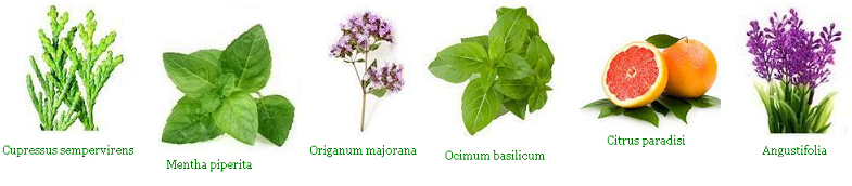 Aromatouch Növenyek
